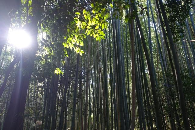 path of bamboo