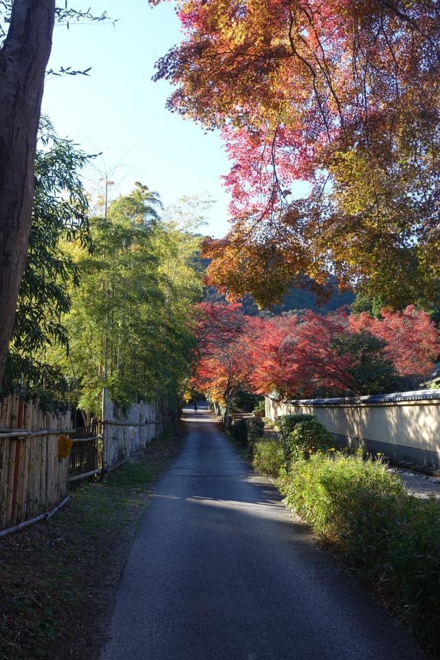arashiyama street