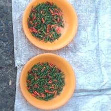 tiny chilis