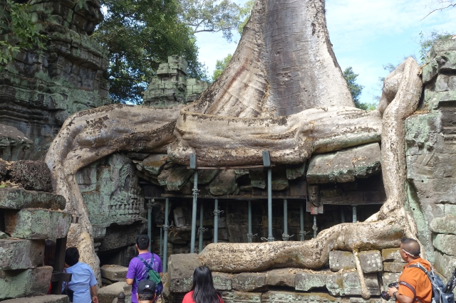 tree roots!