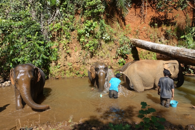 with mahout - bath time