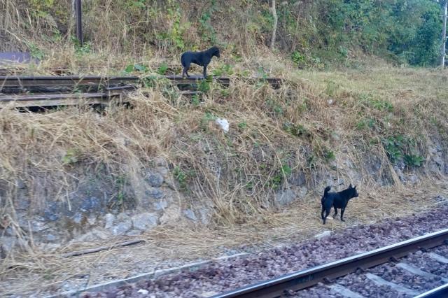 train dogs
