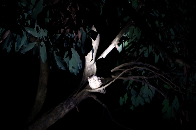 night owl:)