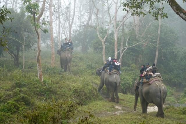 lots of elephants