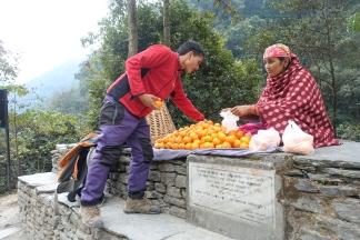 sweet oranges
