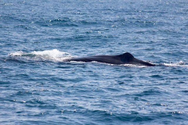 sperm whale!