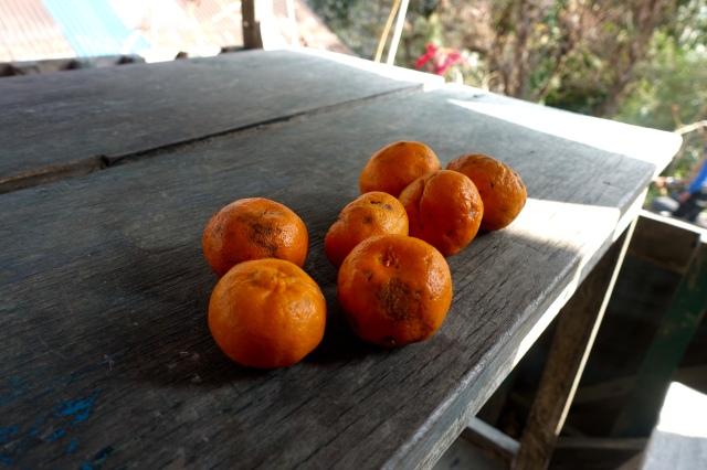 sweetest oranges ever