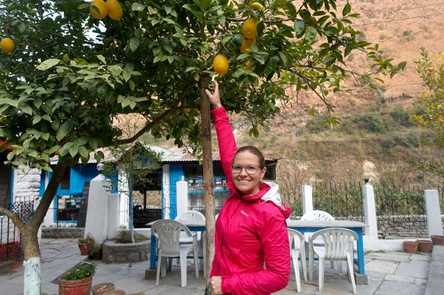omg, HUGE lemons!