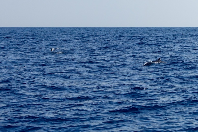 my pic of dolphins:0