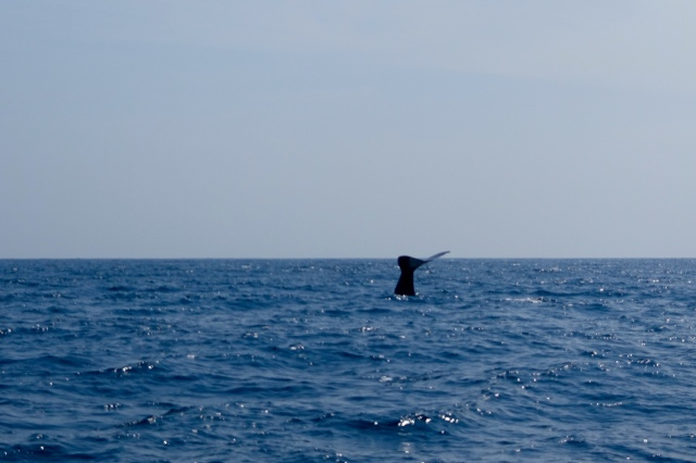 my pic of WHALE