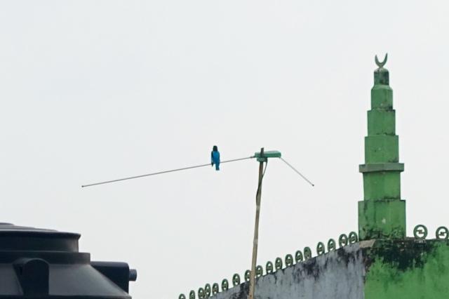 hi, kingfisher:)