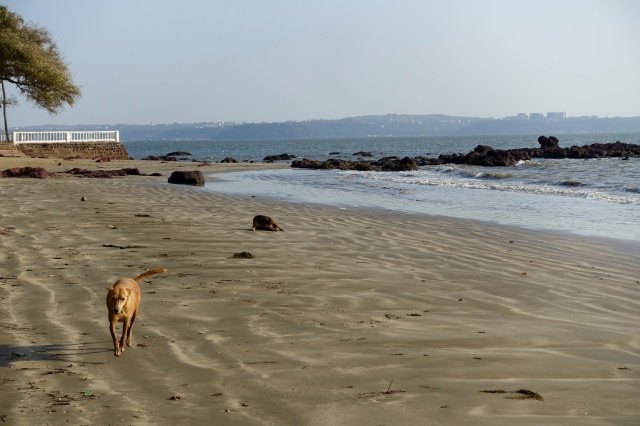 beach dogs!