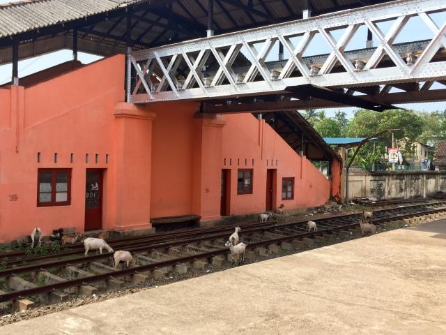 train goats!