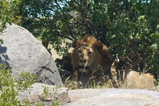 lion rock - bubye