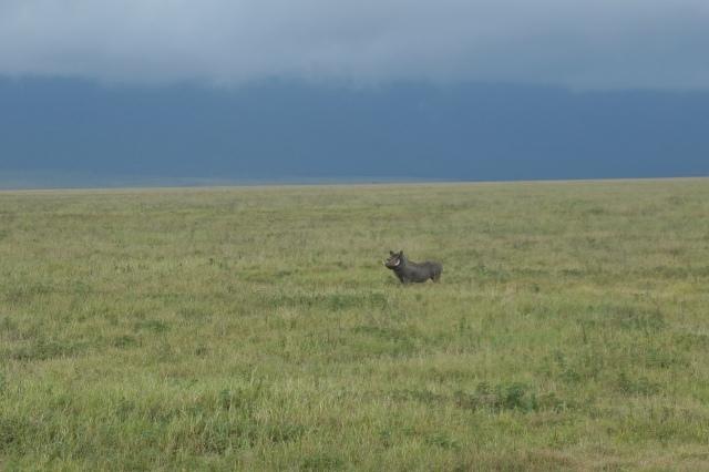 warthog pumba