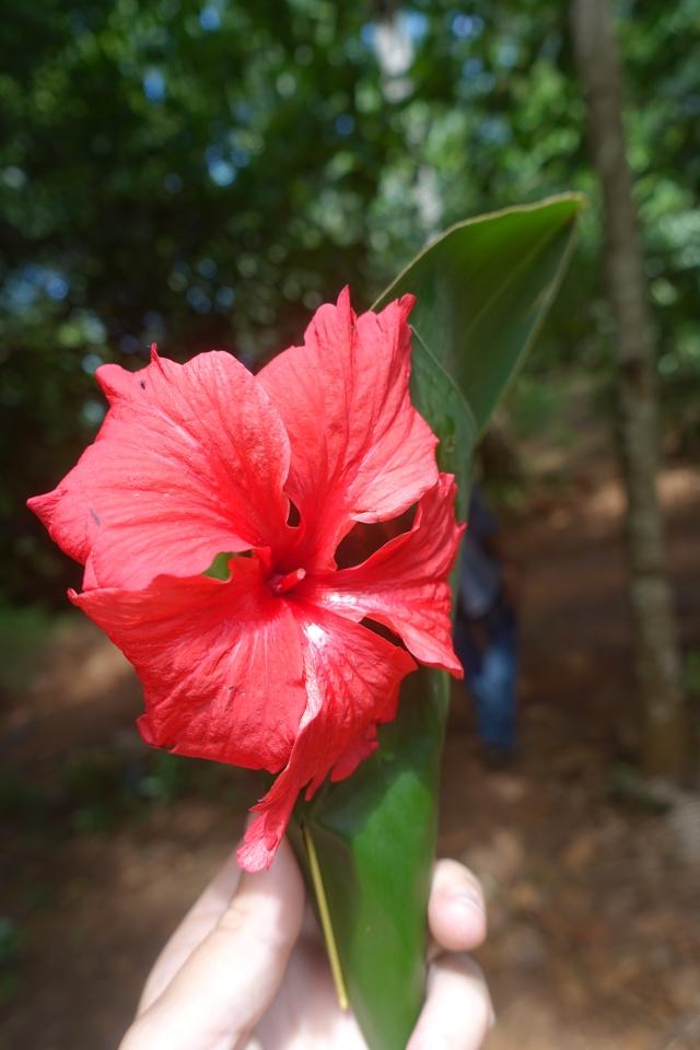 pretty hibiscus:)