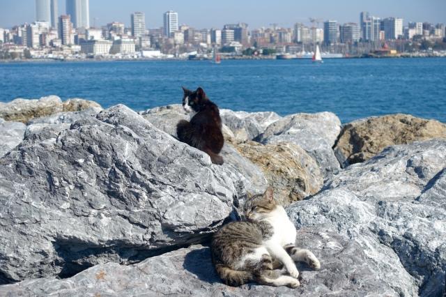 friends sunbathing on the rocks