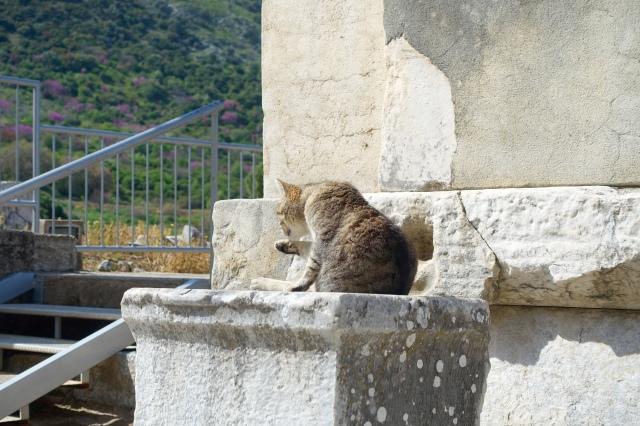 kitty guard